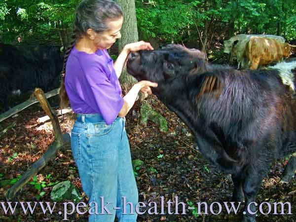 Being around farm animals fosters acquired immunity!