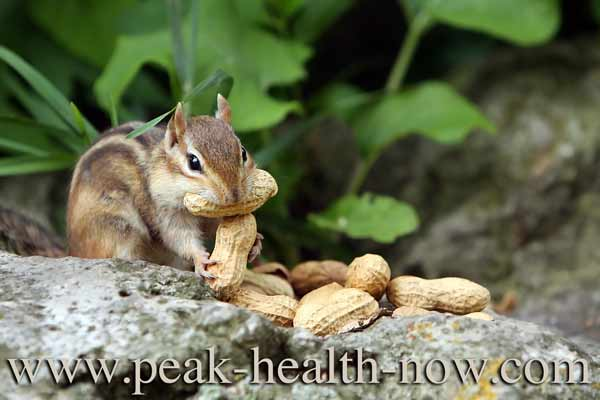 Bulk colon cleanse fiber is for chipmunks - NOT people!