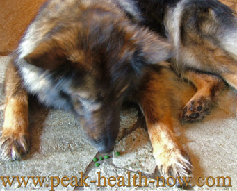 The BEST Chlorella for Dogs